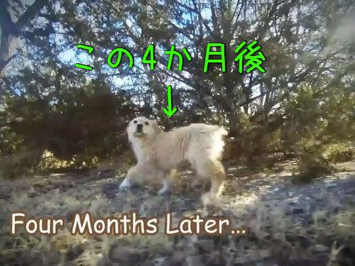 子犬がママと再会00