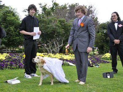 犬と結婚00
