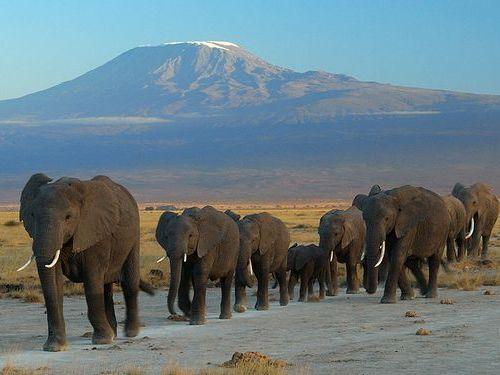 中国人2名226頭の象を殺した罪で30年禁固00