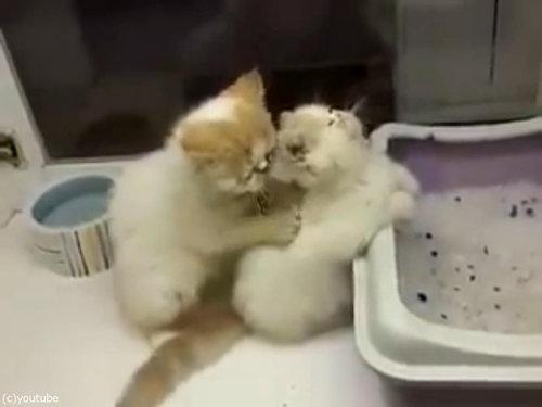 猫が猫の肩もみ06