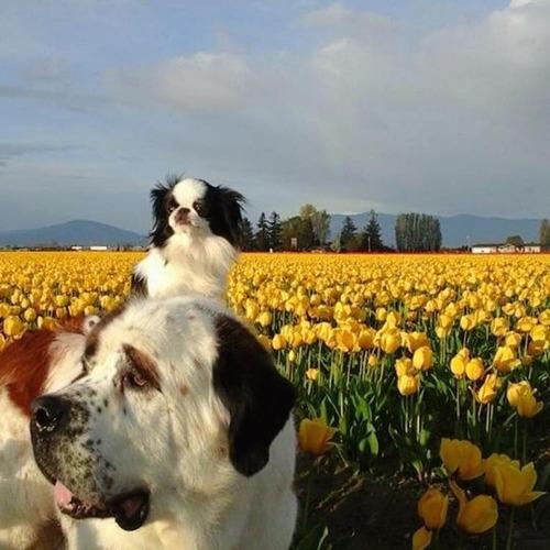 親友を背中に乗せる犬04