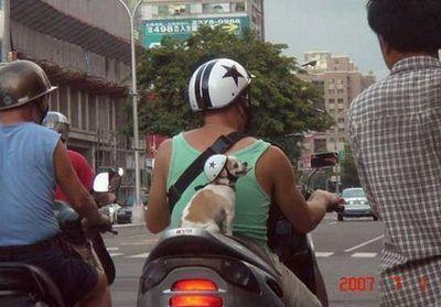 犬と離れられない人々02