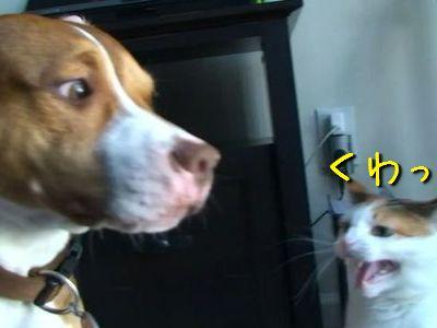 猫パンチと犬