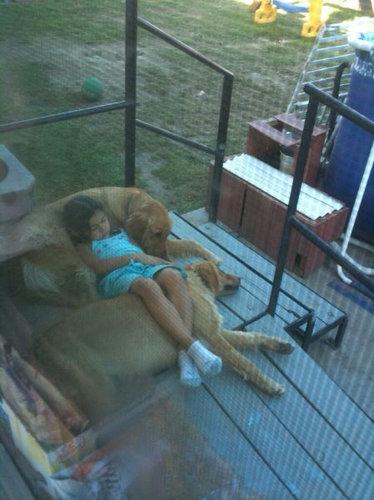 猫好きを犬好きにする写真08