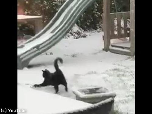 猫、雪の中でも元気いっぱい00
