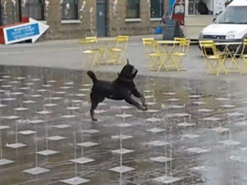 噴水に喜びを覚えてまった犬01