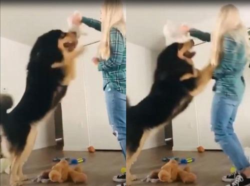 大型犬を飼うときに気を付けること01