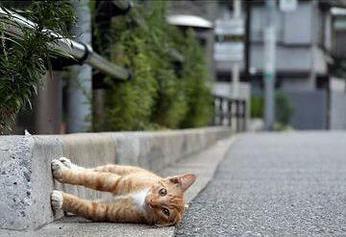 壁ぎわの猫01