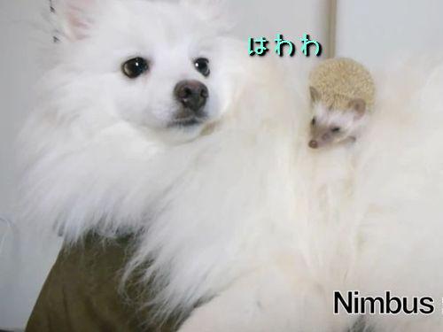 ハリネズミと犬00