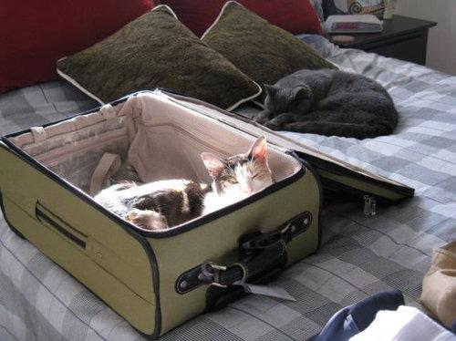 飼い主が旅行に行くことに気付いたペットたち02