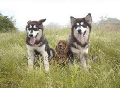 3匹の犬の成長05
