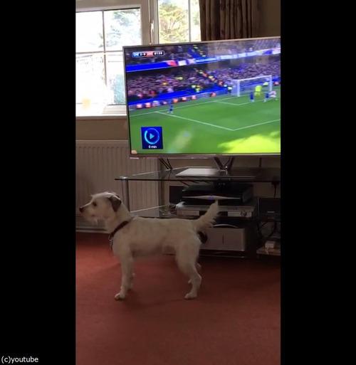 サッカーと犬05