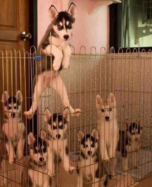 どの犬を選ぶか決めた01