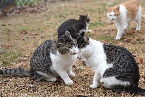 嫉妬する猫02
