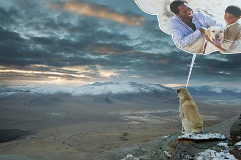 ヒマラヤ登山に犬が着いてきた05