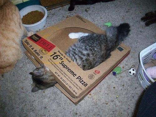 ピザ猫20