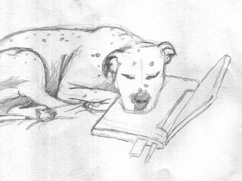 犬とスカイプ02