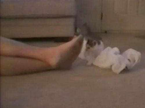 足のにおいを嗅いだ子猫01