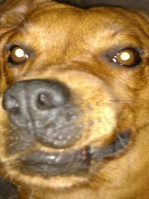 クールな犬05