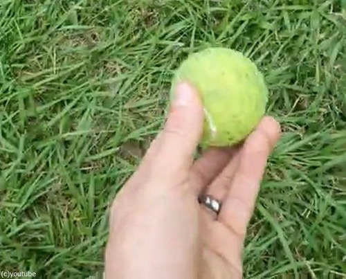 光速でボールをキャッチする犬00