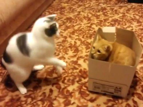 猫2匹と1箱01
