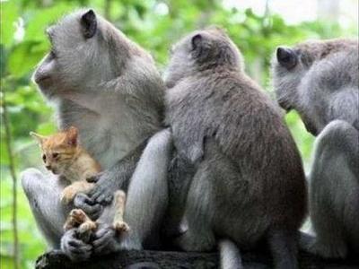 猿と猫の仲TOP