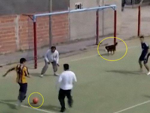 サッカーでゴールを決めた犬00