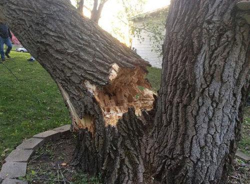 大木が倒れてきた01