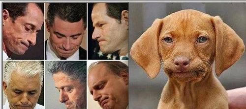 犬の不倫スキャンダル01