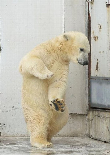 楽しい白クマ08