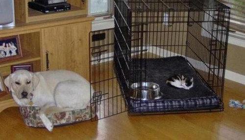 猫にベッドを奪われる犬たち18