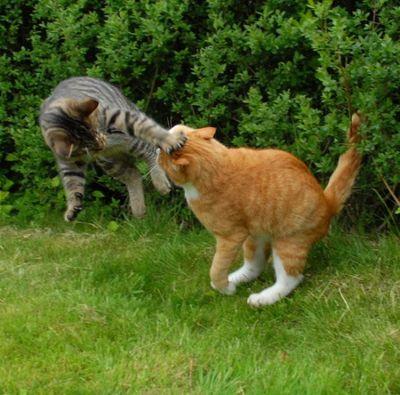 壮絶なる2匹の猫06