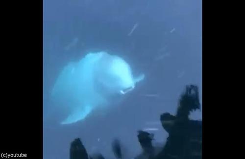イルカがiPhoneを拾ってくれた01