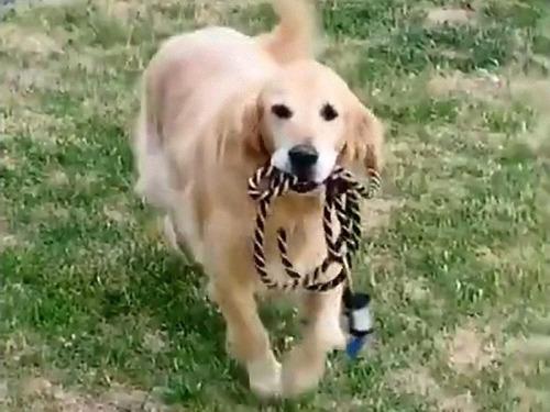 散歩が待ちきれない犬03