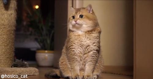 もっちもち猫03