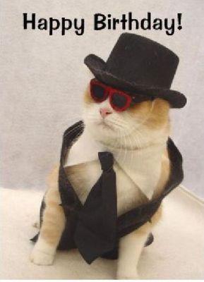 ハッピバースデーな猫08