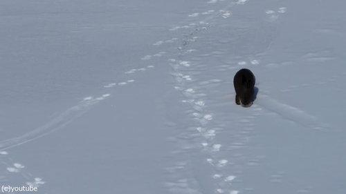雪をすべるカワウソ02