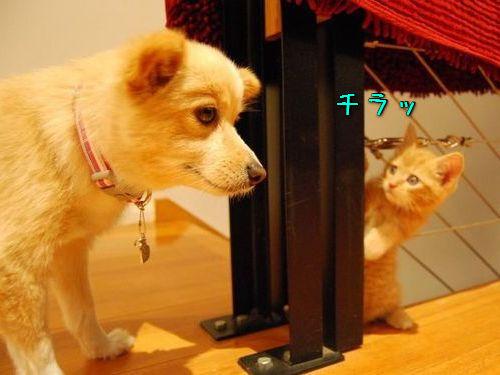 00かくれんぼする猫たち