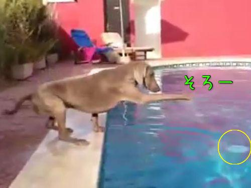 プールと犬00