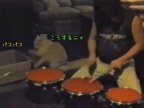 ドラムのお手本を見せる猫00