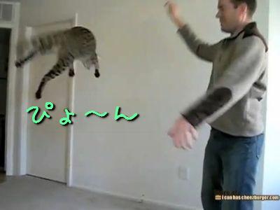サバンナキャットのジャンプ