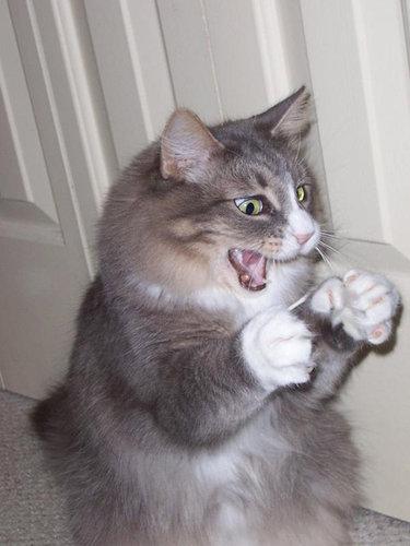 猫の綿棒キャッチ08