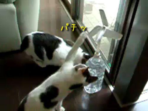 猫パンチ発電