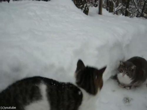 雪遊びが大好きな猫04