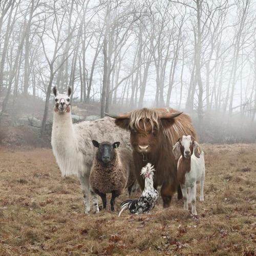 今にも映画が始まりそうな動物たち01