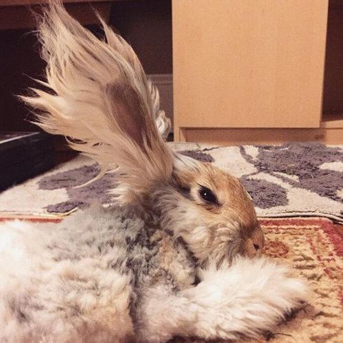 翼のような耳を持つウサギ03