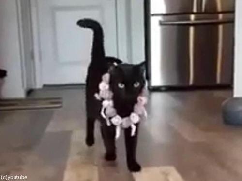 猫のファッションショー01