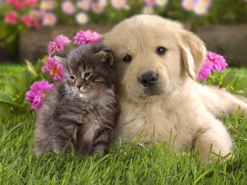 他の動物と仲良くする猫10