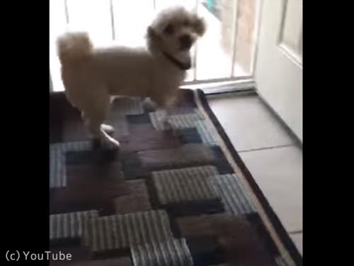 犬と猫の違い04