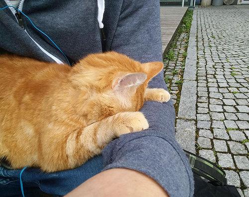 アウグスブルク大学の猫05